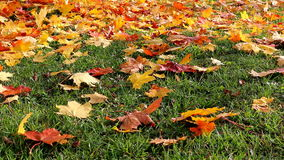Na trawie jesień liść zbiory wideo