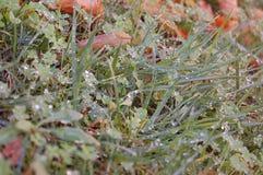 Na trawie ranek rosa Fotografia Royalty Free