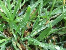 Na trawie wodne krople obraz stock