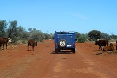 Na trilha no arbusto australiano Imagens de Stock