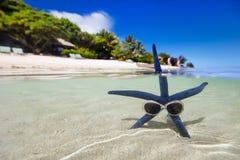 Na tropikalnej plaży błękitny rozgwiazda Zdjęcie Stock