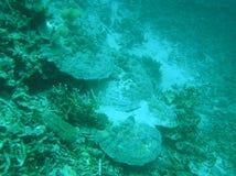 Na Tsunami van Coral Reefs stock foto's