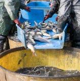 Na uit visserij Royalty-vrije Stock Foto's