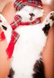 Na właścicieli swój podołkach kota dosypianie Fotografia Stock