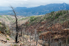 Na Waldo Canyon Forest Fire in Colorado stock foto