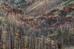 Na Waldo Canyon Forest Fire in Colorado royalty-vrije stock afbeelding