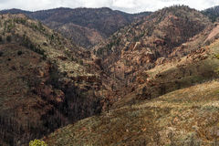 Na Waldo Canyon Forest Fire in Colorado royalty-vrije stock foto's