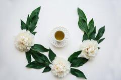 na widok Świeży fragrant, zdrowy ziołowy i Biali kwiaty są niedalecy obraz stock