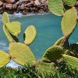 Na wybrzeżu bonkreta kłujący kaktus Zdjęcie Stock