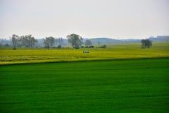 Na zewnątrz miasta pole - wiejski krajobraz - Obraz Stock