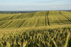 Na zewnątrz miasta pole - wiejski krajobraz - Obraz Royalty Free