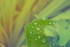 Na zielonym liść wodne krople Fotografia Stock