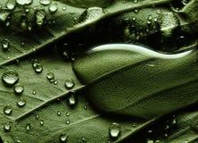 Na zielonym liść wodne krople obrazy stock