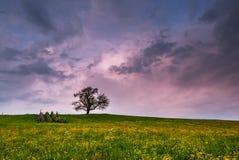 Na zmierzchu pojedynczy drzewo Obraz Stock