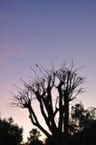 Na zonsondergang Stock Afbeelding