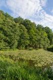河Naab在巴伐利亚 图库摄影