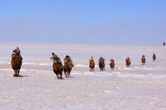 Naadam camel racers Stock Images