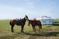 Naadam Mongolian herders meeting Stock Images
