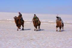 naadam wielbłądzi setkarzi Fotografia Royalty Free