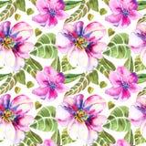 Naadloos BloemenPatroon Stock Afbeeldingen
