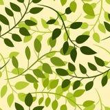 Naadloos bloemenpatroon met groene acaciabladeren royalty-vrije illustratie