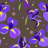 Naadloos bloemenpatroon met irissen Royalty-vrije Stock Afbeelding