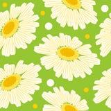 Naadloos bloemenpatroon met margriet Stock Fotografie
