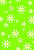 Naadloos bloempatroon Stock Afbeeldingen
