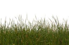 Naadloos Geïsoleerd Gras Royalty-vrije Stock Afbeelding