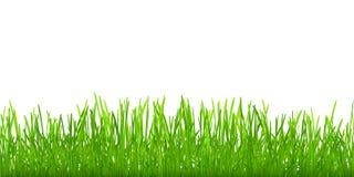 Naadloos gras Stock Afbeelding