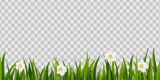 Naadloos groen die gras, de grens van de lentebloemen op transparante achtergrond wordt geïsoleerd Pasen-de decoratieelement van  royalty-vrije illustratie