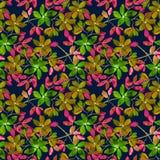 Naadloos kleurrijk bloemenpatroon op donkerblauwe achtergrond Stock Fotografie