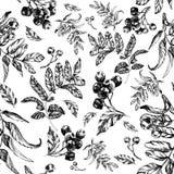 Naadloos lijsterbessenpatroon met lijsterbessenbladeren royalty-vrije illustratie