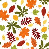 Naadloos met de herfstbladeren Stock Fotografie