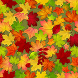 Naadloos met rode en gele de herfstbladeren Stock Foto's