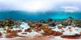 Naadloos panorama van de zeebodem Royalty-vrije Stock Fotografie