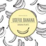 Naadloos patroon Bananen van vectorschetsen Gedetailleerde citrusvruchtentekening De uitstekende illustratie van de schetsstijl Stock Foto's