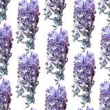 Naadloos patroon met blauwe hyacinten stock illustratie
