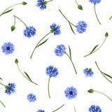 Naadloos patroon met blauwe korenbloemen Vector illustratie royalty-vrije illustratie