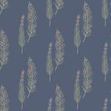 In naadloos patroon met bosinstallaties, bladeren, zaden en kegels Royalty-vrije Stock Fotografie