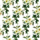 Naadloos patroon met chrysant Hand getrokken waterverfillustratie royalty-vrije illustratie