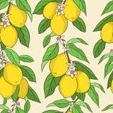 Naadloos patroon met citroenen Royalty-vrije Stock Fotografie