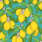 Naadloos patroon met citroenen Stock Foto