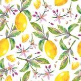 Naadloos patroon met citroenen op witte achtergrond Stock Fotografie