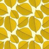 Naadloos patroon met de bladeren van de iepherfst vector illustratie