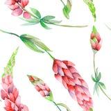 Naadloos patroon met de bloemen van waterverf rode lupine Royalty-vrije Stock Afbeeldingen