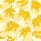 Naadloos patroon met de herfstbladeren Geïsoleerden het blad van de esdoorn Stock Afbeeldingen