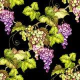 Naadloos patroon met druiven De hand trekt waterverfillustratie Royalty-vrije Stock Fotografie