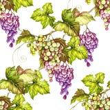 Naadloos patroon met druiven De hand trekt waterverfillustratie Stock Foto's
