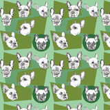 Naadloos patroon met Franse buldog op een groenachtige achtergrond Stock Fotografie